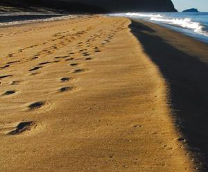 sun sea surf